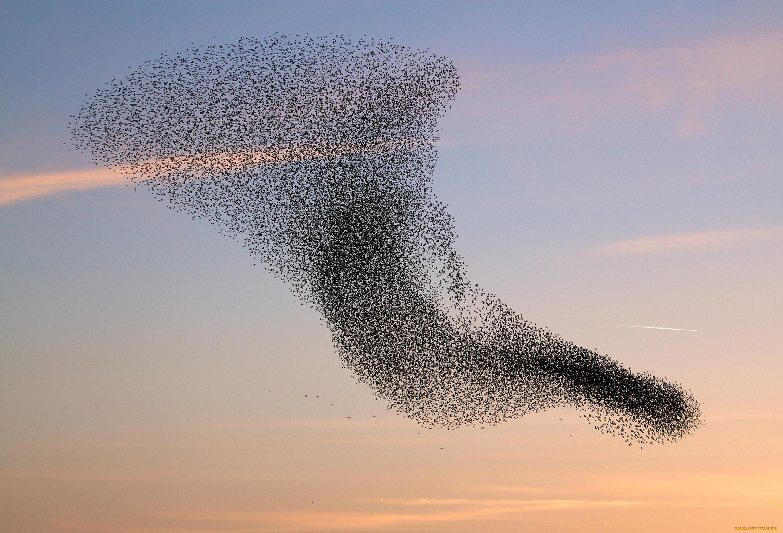 стая-птиц